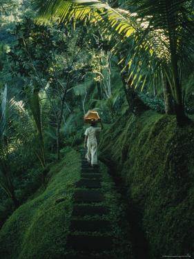 A Woman Carries Food Baskets on Her Head Under Tropical Trees