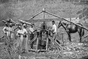 A Wooden, Horse-Powered Suger Cane Crushing Mill, West Indies, 1922