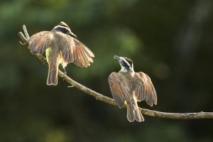 Hummingbirds at the Asa Wright Nature Center in Trinidad. by Aaron Huey