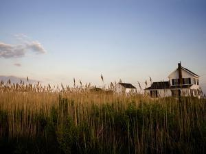 Reeds Obscuring Houses in Tylerton on Smith Island by Aaron Huey