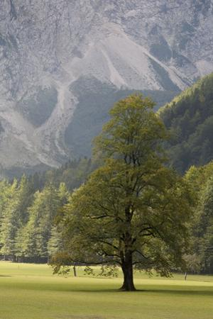 The Lush and Untouched Logarska Dolina or Logar Valley by Aaron Huey