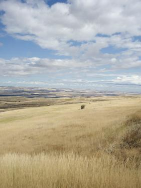 Farmland Off Highway 84, Near Pendleton, Oregon, United States of America, North America by Aaron McCoy