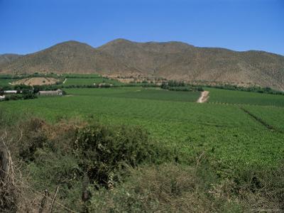 Grape Vines in the Valle De Elqui, Chile, South America