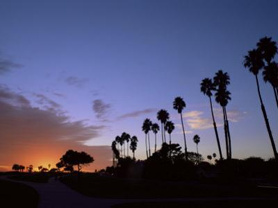 Palm Trees in Silhouette in Park on Bluff Overlooking the Pacific Ocean, Santa Barbara, California