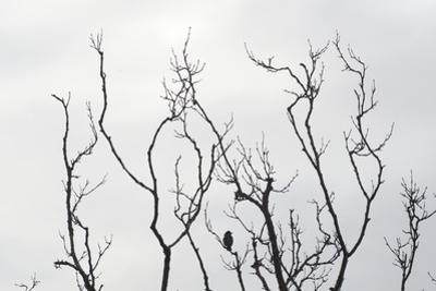 Silhouette of Bird on a Bare Branch in Winter