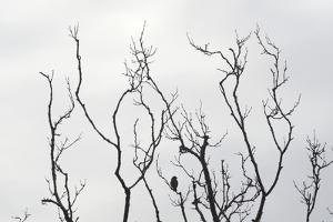 Silhouette of Bird on a Bare Branch in Winter by Aaron McCoy