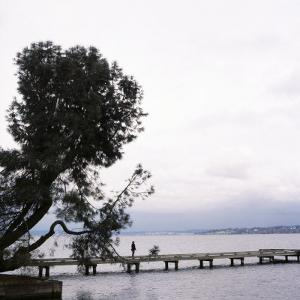 Woman Stands on Dock Next to Pine Tree, Lake Washington, Seattle, Washington State, Usa by Aaron McCoy