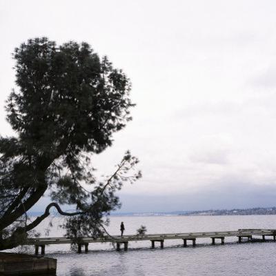 Woman Stands on Dock Next to Pine Tree, Lake Washington, Seattle, Washington State, Usa