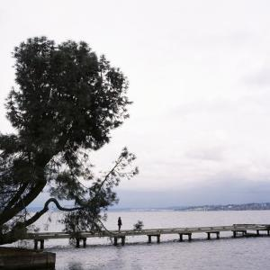 Woman Stands on Dock Next to Pine Tree, Lake Washington, Seattle, Washington State, Usa by Aaron McCoy
