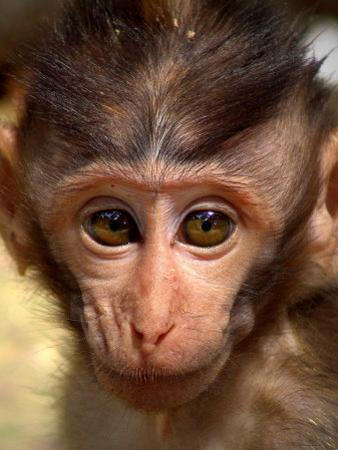 Baby Monkey by Abdul Kadir Audah