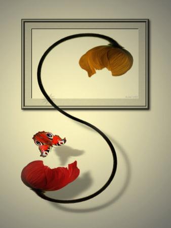 Butterfly Beside Poppy Flower by Abdul Kadir Audah