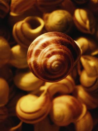 Cluster of Seashells by Abdul Kadir Audah