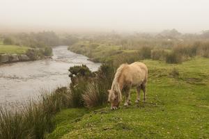 Foggy Day on Dartmoor by Abdul Kadir Audah