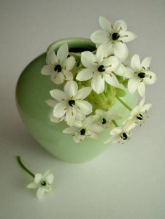 Still Life Photograph, a Green Vase with Ornithogalum Flowers by Abdul Kadir Audah