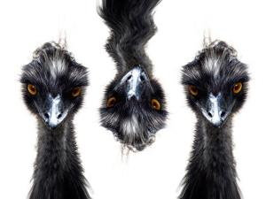 Three Emus by Abdul Kadir Audah
