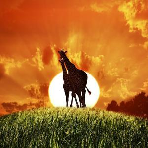 Giraffes At Sunset On A Top Of Hill by abracadabra99