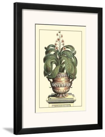 Antique Munting Aloe II by Abraham Munting