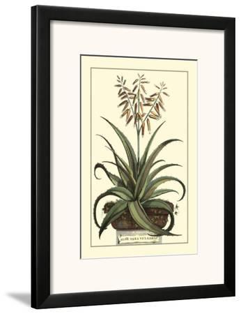 Antique Munting Aloe III by Abraham Munting
