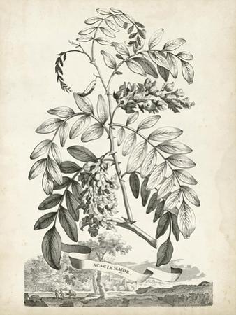 Scenic Botanical I by Abraham Munting