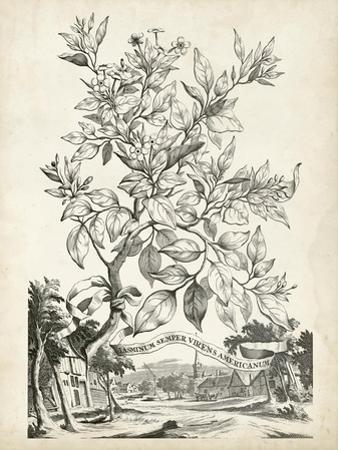 Scenic Botanical II by Abraham Munting