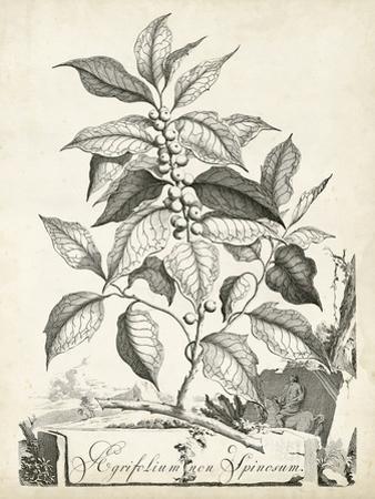 Scenic Botanical III by Abraham Munting