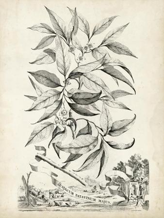Scenic Botanical IV by Abraham Munting