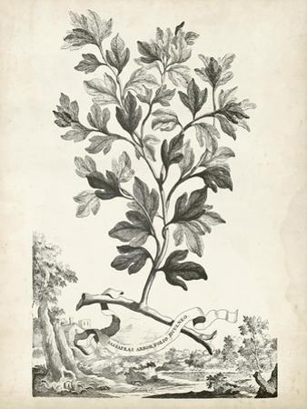 Scenic Botanical V by Abraham Munting