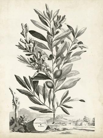Scenic Botanical VI by Abraham Munting