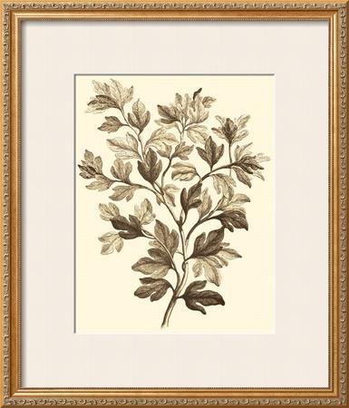 Sepia Munting Foliage I by Abraham Munting