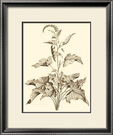Sepia Munting Foliage II by Abraham Munting