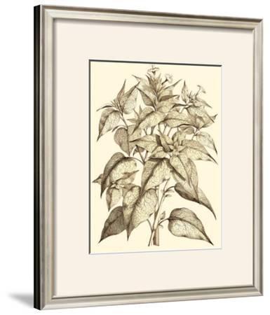 Sepia Munting Foliage III by Abraham Munting