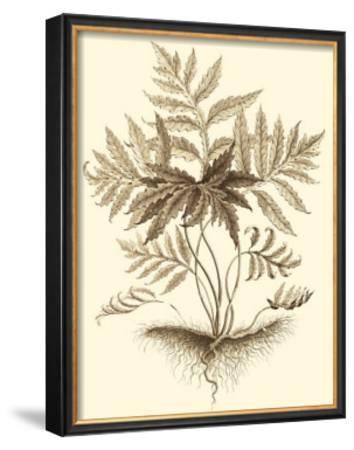 Sepia Munting Foliage IV by Abraham Munting