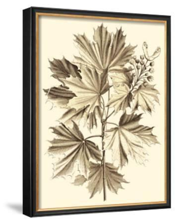 Sepia Munting Foliage V by Abraham Munting