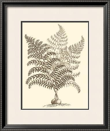 Sepia Munting Foliage VI by Abraham Munting
