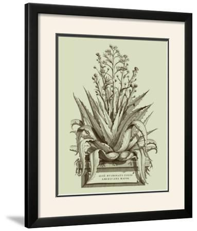 Vintage Aloe IV by Abraham Munting