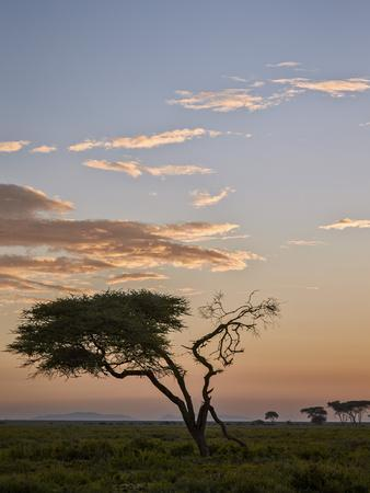 https://imgc.allpostersimages.com/img/posters/acacia-tree-and-clouds-at-dawn_u-L-PXXVFO0.jpg?artPerspective=n