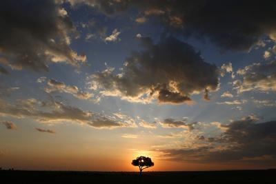 https://imgc.allpostersimages.com/img/posters/acacia-tree-and-clouds-at-sunset-masai-mara-national-park-kenya_u-L-Q1GYM9O0.jpg?artPerspective=n