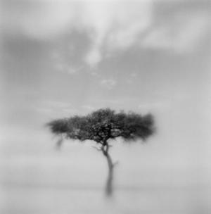 Acacia Tree, Masai Mara Game Reserve, Kenya