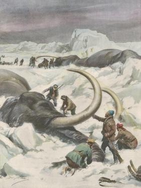 Two Mammoths are Found Frozen in the Jamalm Peninsula 2400 Kilometres North of Saint Petersburg by Achille Beltrame