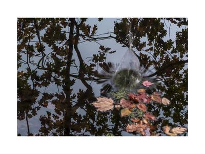 https://imgc.allpostersimages.com/img/posters/acorn-falling-into-pond-with-tree-reflections_u-L-Q1CQQG40.jpg?artPerspective=n