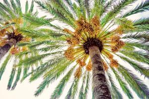 Chic Palms I by Acosta