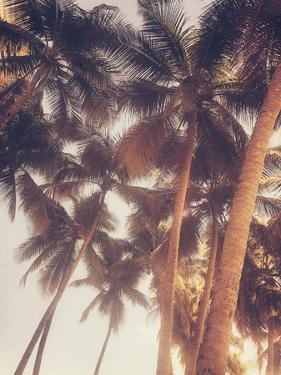 Vintage Palms by Acosta