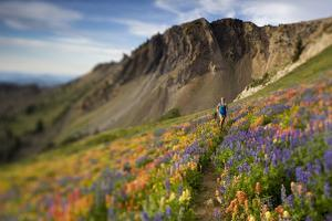A Woman Enjoys a Morning Trail Run in a Meadow of Wildflowers at Snowbird Ski and Summer Resort, Ut by Adam Barker