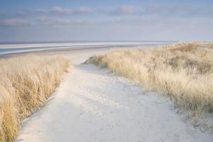 Dunes on Langeoog by Adam Brock