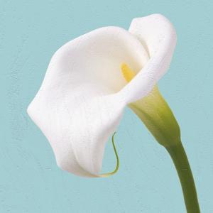 Fresh Lily I by Adam Brock