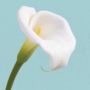 Fresh Lily III by Adam Brock