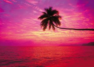 Paradise Shores by Adam Brock