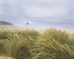Sea Breeze Dunes by Adam Brock