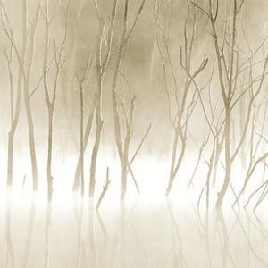 Soft Light II by Adam Brock