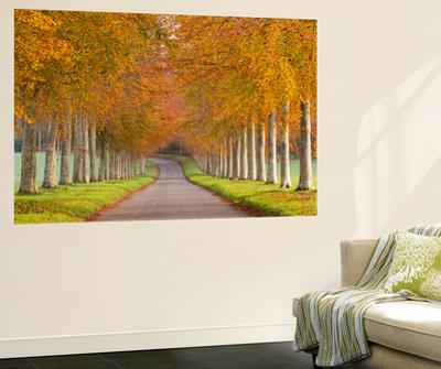 Avenue of Colourful Trees in Autumn, Dorset, England. November by Adam Burton